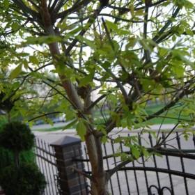 cd  fotek pt. budzi się ogród