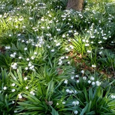 Zrobiło się ciepło i słonecznie, także tu - w Kopenhadze.Ogród botaniczny, na początku kwietnia ubiegłego roku, był bardziej kolorowy. Morze, jak dla mnie,  jest piękne o każdej porze roku :)