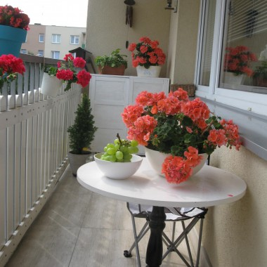 "oto mój balkonowy ""ogródek"":)"