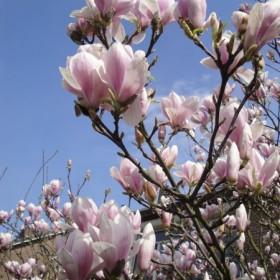 wiosna...wiosna radosna