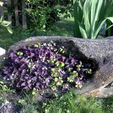Ogródeczek na glinie