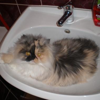 Koty,koteczki :)