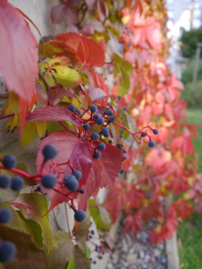 Balkon, Ostatnie ciepłe dni jesieni - A na działce robi się cudownie czerwono