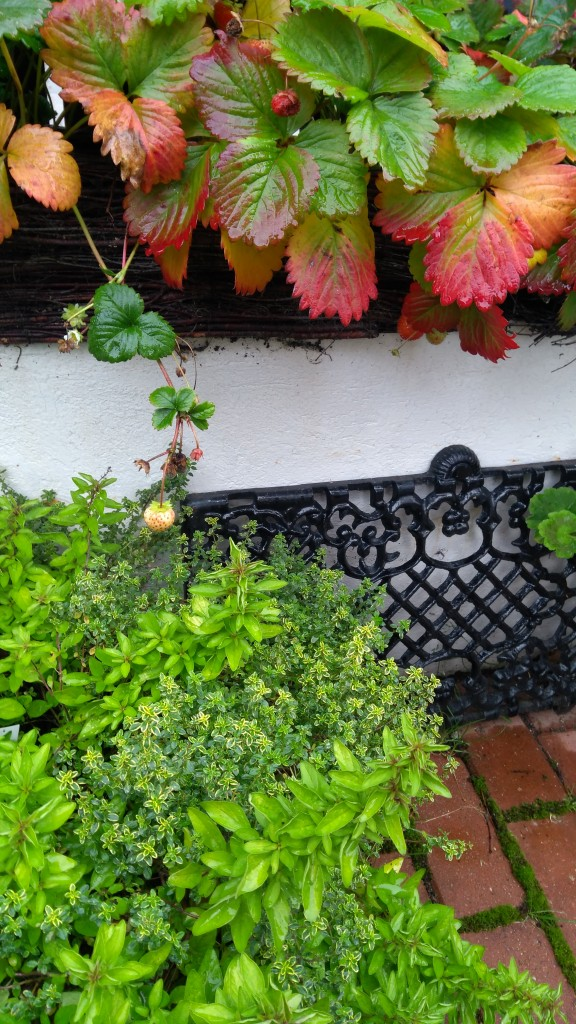 Pozostałe, Jesiennie...