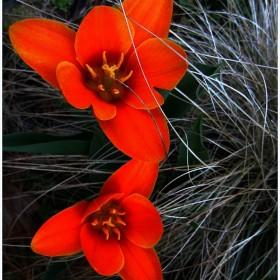 Kolorowy Pierwszy Dzien Wiosny...