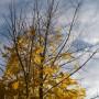 Pozostałe, Listopadowe małe radości................ - ............i złoto jesieni...............