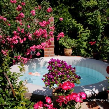 Mała Toskania w kwiatach