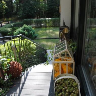 Orzeszki laskowe suszą się na zimę dla moich wiewiórek:)