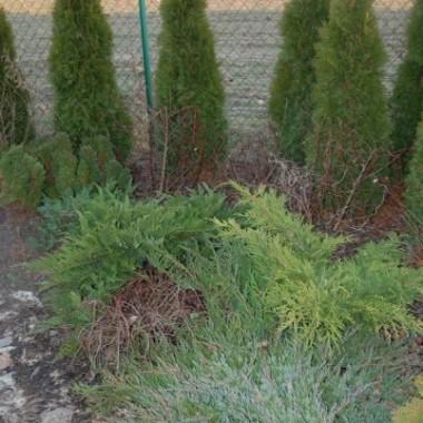 Postanowiłam zacząć przygotowania ogrodu do sezonu wiosennego.Drugi dzień wycinam,wyrywam formuje i znalazłam kilka oznak wiosny.Zaczyna być już fajnie tylko mam nadzieję że to co już ma pączki nie zmarznie.Na poprawe nastroju pare zdjęć.
