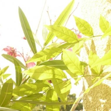 ...............i moje roślinki na balkonie............