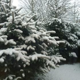 zima w moim ogrodzie ....