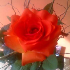 Wszystkiego najlepszego dla mojej  Mamy i wszystkich  Mam.:):)
