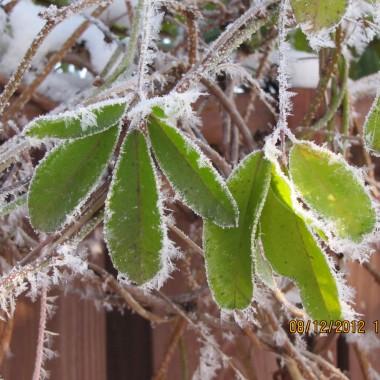 Mój zimowy ogród.
