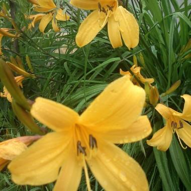 Mój wciąż jeszcze wiosenny taras:)