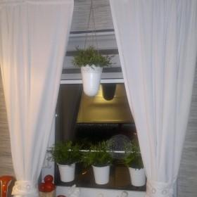 Okno ozdobione zielenią