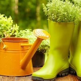 Inspiracje ogrodowe w zasięgu ręki. Ile zapłacisz za nowe trendy?