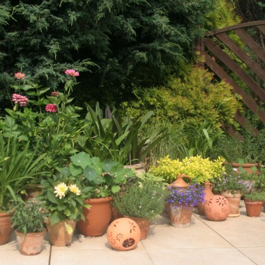 to mój ogród ziołowy i nie tylko :) część tarasu bez daszku