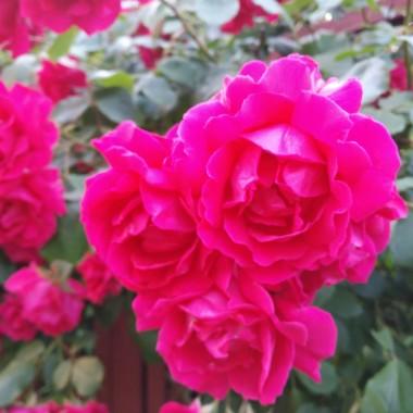Lato w naszym ogrodzie ....
