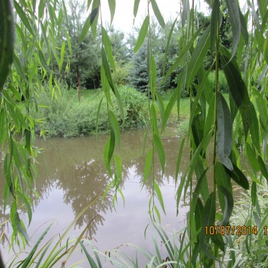 Deszczowy las przy oczku wodnym