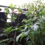 Rośliny, Rosliny - Ziemniaki to ladne rosliny:-)