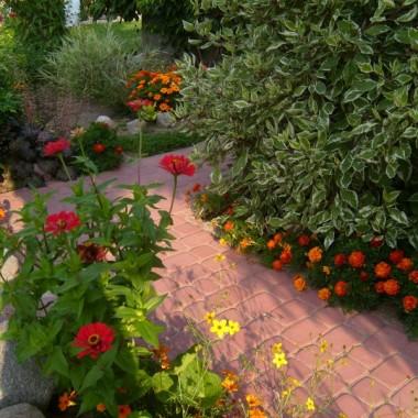 zakątki z mojego ogrodu