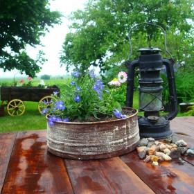 ogród po deszczu:)