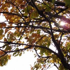 Moja jesień :)