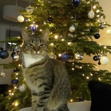 Kot Felix pozdrawia &#x3B;)