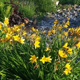Czerwcowy ogród.......