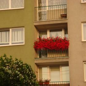 Balkon - pelargonie