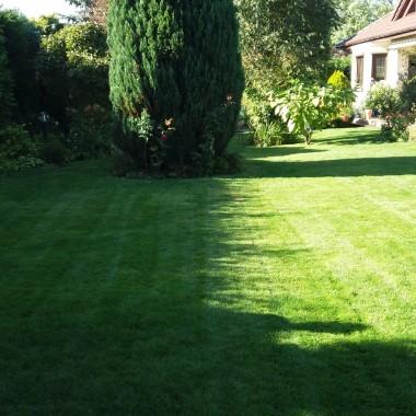 Trawnik skoszony, godzina 15 i dłuuugie jesienne cienie....
