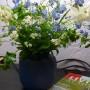 Pozostałe, galeria nieprzyzwoita ;) - pierwszy bukiet z ogrodka do domu... zawsze mi to bardzo ciezko przychodzi, bo jednak w wazonie kwiaty umieraja szybciej...