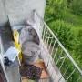 Pozostałe, Nasz mały balkon :)