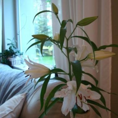 Witam dzis troszke slonca to polatalam za aparatem po ogrodzie i domu , ogrod jest spontaniczny co gdzie urosnie albo cos dosadze to zostaje .Dzis zebralam w korze 15 podgrzybkow i byla zupka..Uwielbiam jak cos kwitnie i pachnie dlatego w domu lilie i hoja wieczorem cudna woń......