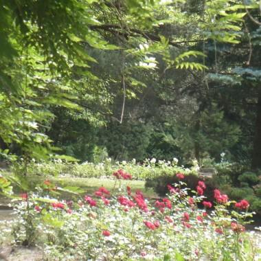 ............i park pełen róż.............