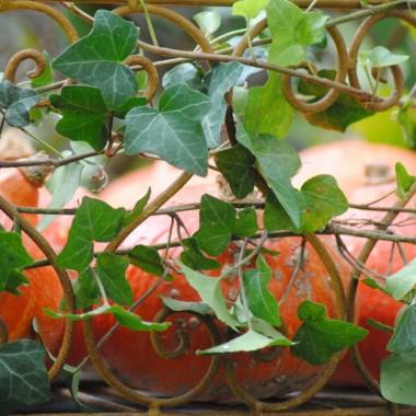 ...czyli borówkowe szaleństwo :) tradycyjnie już na początku sierpnia zostaję obdarowana borówką w ilościach hurtowych . Zatem zapraszam na borówkowe ,sierpniowe aranżacje :)