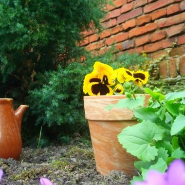 tajemniczy ogród:)