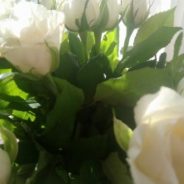 ................i białe róże...................
