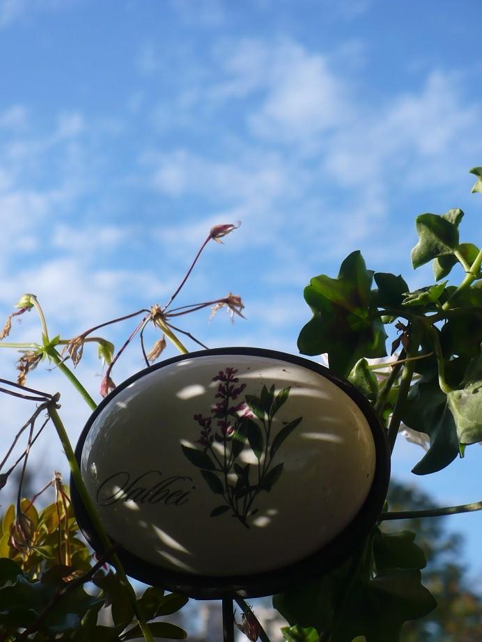 Pozostałe, Listopadowe małe radości................ - ...........i błękitne niebo ...........