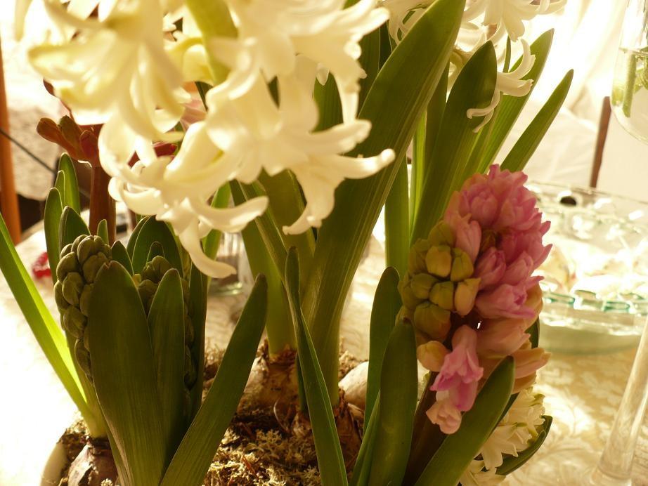 Dekoratorzy, Czekając na wiosnę .................. - ...................i hiacynty na balkonie................