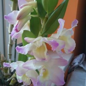 mój kwiat