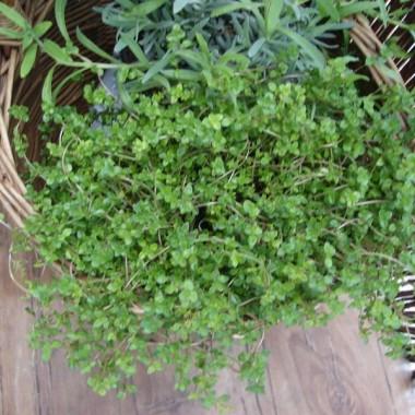 Moje roślinki w domu i na balkonie