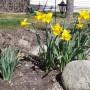 Wizualizacje, Wiosna :)