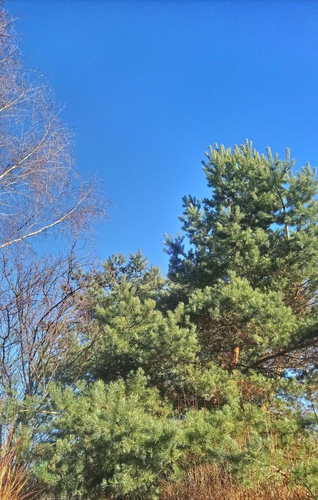 Dekoratorzy, Czekając na wiosnę .................. - .................i zielona sosna...................