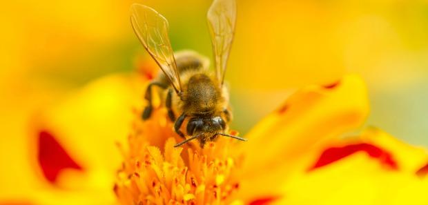 Rośliny miododajne, które przyciągną pszczoły w ogrodzie
