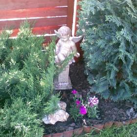 Anioły zamieszkały w naszym ogrodzie