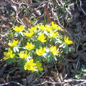 wiosna w moim ogrodzie..............:)
