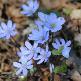 wiosna i jej zapach