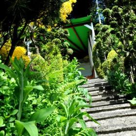 majowy ogród
