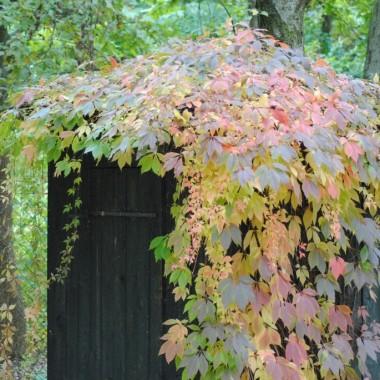 Festiwal jesiennych barw i smaków ....